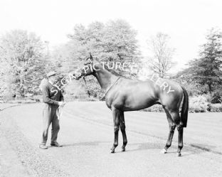 Sir Ivor with Lester Piggott (553-01)